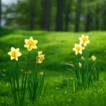 La primavera y el peso