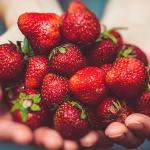 ¡Es tiempo de fresas!